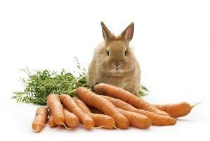 O que coelhos comem?