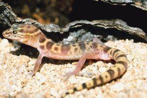 O que lagartos comem na natureza?