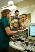 O que você tem que fazer para se tornar um veterinário recepcionista?