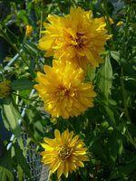 Flores que complementam uma casa cinzenta