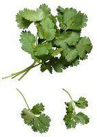 O que as ervas vão bem com caril?
