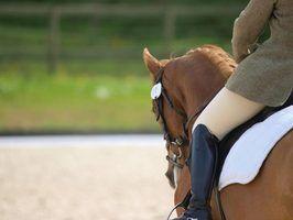 Qual é a diferença entre bares e semi completos cavalo de um quarto?