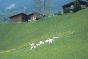 Que tipo de grama que eu preciso plantar para cabras?