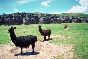 Que tipo de bloco de mineral faço para obter uma alpaca?