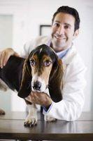 Que tipos de veterinários estão lá e quanto é que cada marca?