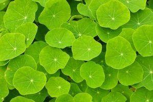 As plantas usam a fotossíntese para criar sustento.