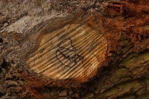 O que colocar em uma fatia de madeira para uma peça central