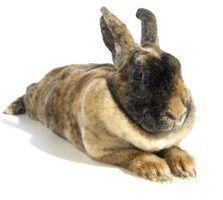 Que tipo de roupa devo colocar na gaiola do meu coelho?