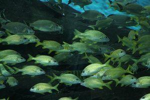 Que tipos de peixes são pobres em gordura?