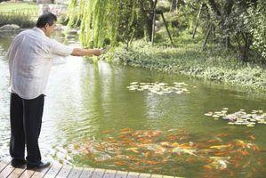 Quais filtros são os melhores para um lago de carpas?