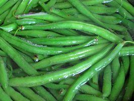 Que os vegetais e frutas naturalmente têm o hormônio estrogênio?