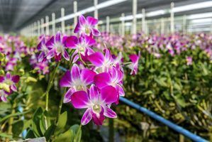 Material branco sobre orquídeas