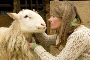 Por que as minhas ovelhas tosse?