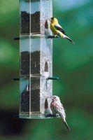 As aves não estão comendo do meu alimentador